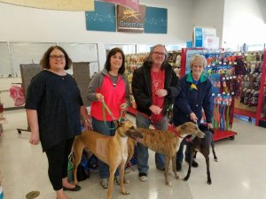 Volunteers at a greyhound meet and greet