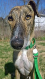 Silvino poses in the yard at his foster home.