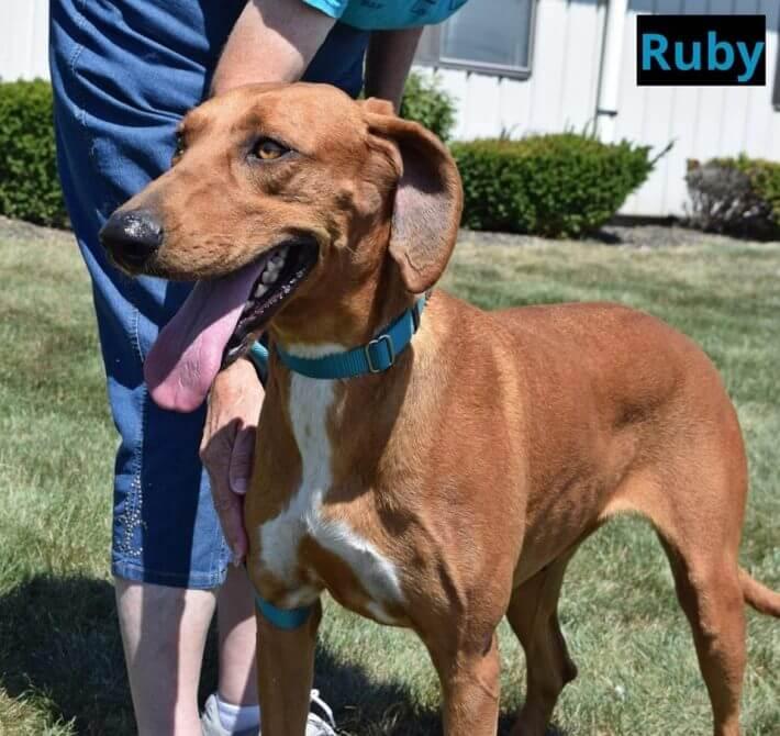 Ruby – 2530